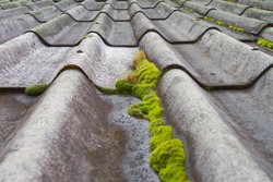 Look at the moss on the roof.