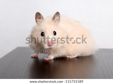 look of a hamster on a light background