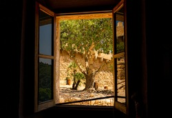 Look on olive tree through open window