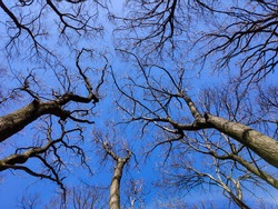 Look up into the treetops without leaves in winter.