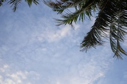 Look-up picture of palm trees and blue sky with clouds background
