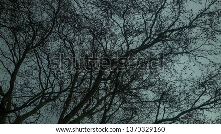 look up sky branches with leaves cold wheather #1370329160
