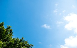 Look Up View of Cloudy Blue Sky With Top Of The Tropical Green Leaves Tree, Clouds Are On The Right With Sunlight Glare, Copyright Area Is On The Blue Sky Space.
