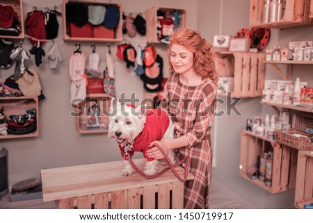 Looking at dog. Loving caring red-haired owner of cute little dog looking at him in pet shop