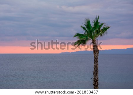 Looking at the nice orange colour sunset behind a tall palm tree.