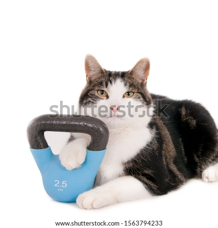 Looking cat with his paw resting on a 2,5 kg kettlebell. On white.