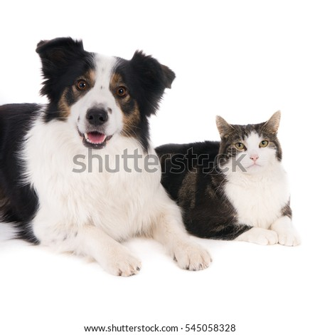 Looking dog and cat, side by side. On white.(1x1)