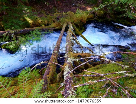 Looking Down at Downing - A section of Downing Creek just below the upper falls - Cascade Range - near Marion Forks, OR #1479076559