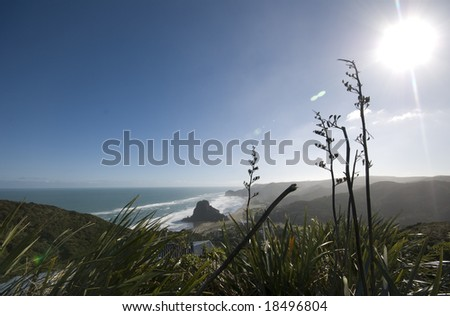 Looking down over New Zealand's rugged surf beach at Piha