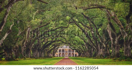 Looking down the tree tunnel of the infamous Oak Alley Plantation in Vacherie, Louisiana, arguably one of the best preserved and most stunning plantations of the antebellum south. Foto stock ©
