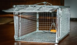 Looking inside of a humane mouse trap cage with cracker for bait-Humane catch and release-Urban photography 2017 kentucky