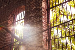 Looking out through rusty iron bars at sunrise or sunset from inside an old brick warehouse. Lens flare shines through the leaves of a catalpa tree growing through the bars.