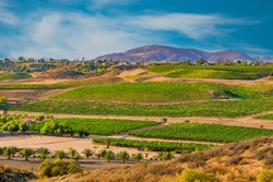 Looking over the wine country in Temecula Valley shows new and older vineyards, wineries, and homes all peacefully nestled in front of the mountains in Southern California.