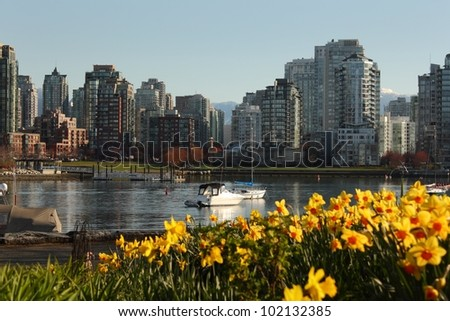 Looking past daffodils across False Creek to downtown Vancouver's Yaletown neighbourhood. British Columbia, Canada.
