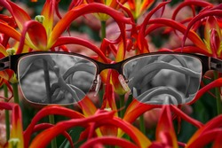 Looking through glasses to black and white tulips focused in women's glasses. Color blindness. World perception during depression. Medical condition. Health and disease concept.