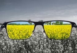 Looking through glasses to colorful nature landscape with blue sky and yellow field. Different world perception. Optimism, hopefulness, mental health concept.