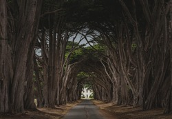 Looking through the Cypress Tree Tunnel to the North District Operations Center in the Point Reyes National Seashore, near Inverness, Califonia, United States.