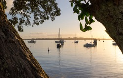Looking through the Pohutukawa trees over the bay and boats at sunset. Russell, Bay of Islands, New Zealand, NZ.