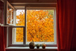 Looking through window on the autumn orange yellow tree. Three pumpkins on the wood window-sill.
