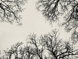 Looking up and surrounded by tree branches in silhouette