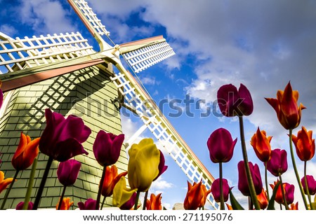 Looking up at blue sky from the bottom of tulip flower stems with large windmill in background