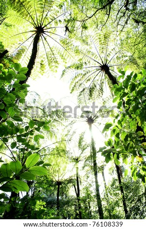 Looking up at forest canopy - stock photo