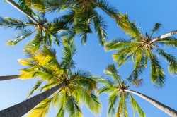 Looking up at palm trees at Surfers Paradise on the Gold Coast in Australia