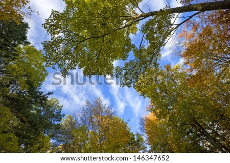 Looking up at the sky from an autumn forest ground
