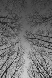 looking up at the sky through the tress