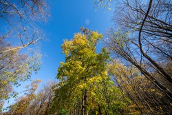 Looking up at trees on the Putnam Trailway glows in the colors of fall in Putnam County, N.Y.