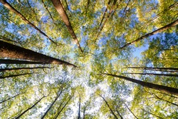looking up in forest