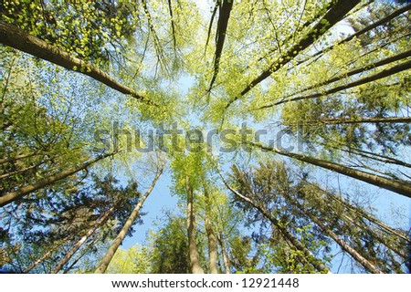 Looking up into the trees in the forest