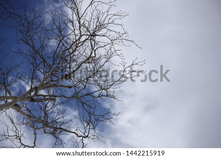 Looking up now seeing blue sky white cloud one tree without leaves imaging tomorrow or day after see same thing impossible enjoy at moment nothing happen forever no expectation having happy life long