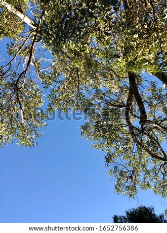 Looking up the clean sky and tree at sunny day