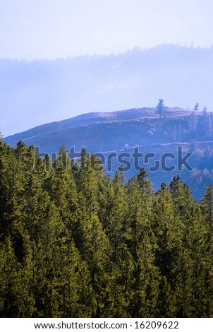 Looking up through several pine trees in forest at mountains in distance