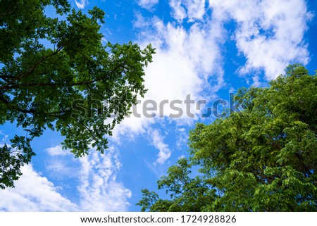 Looking up through the treetops. Beautiful natural frame of foliage against the sky. Copy space.Green leaves of a tree against the blue sky. Sun soft light through the green foliage of the tree. Photo stock ©