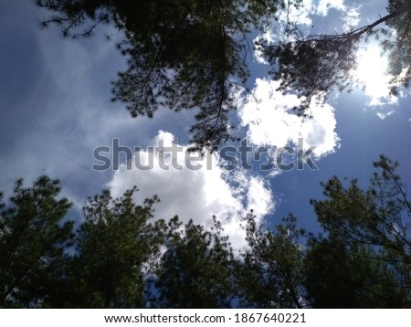 Looking up to the sky framed with leaves and trees