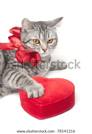 Looking young funny grey cat with red bow and heart, isolated on white - stock photo