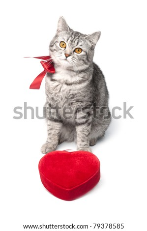 Looking young funny grey cat with red bow and heart, isolated on white