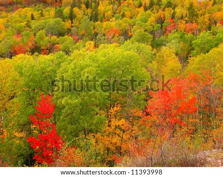 Lookout Mountain Fall Colors