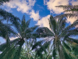lookup daytime sky with palm leaves foreground