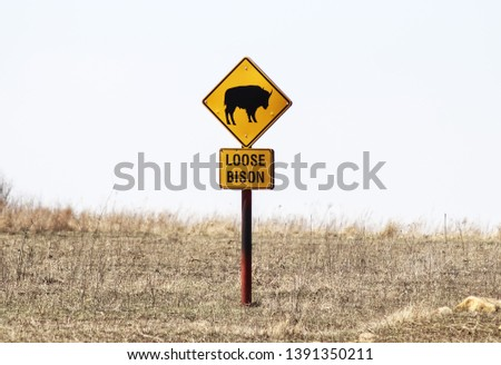 Loose Bison with picture of animal caution sign stands surrounded by winter grass on the Tall Grass Prairie in Oklahoma USA