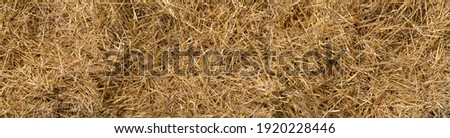 Loose dry straw in close-up - panoramic background Foto stock ©