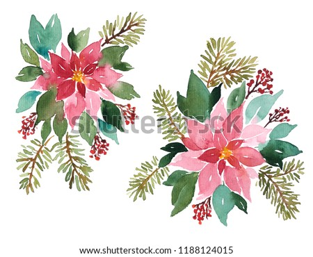 Loose Watercolor evergreen plants for Christmas decoration. Arangements of poinsettia, spruce and red berries
