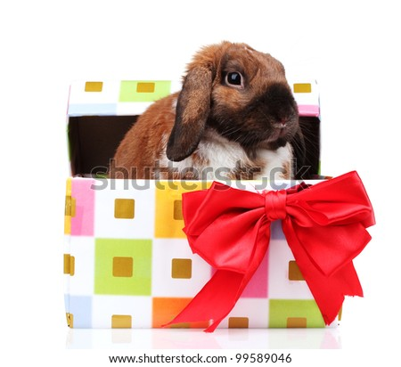 Lop-eared rabbit in a gift box with red bow isolated on white