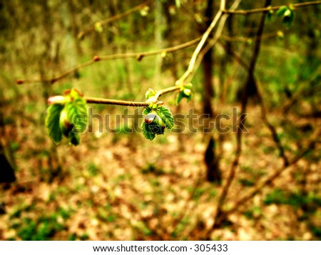 Lop of nuts, focus in second bug 1 - stock photo
