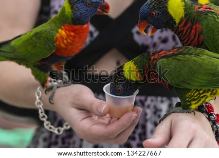 Lories and lorikeets (tribe Lorini) are small to medium-sized arboreal parrots