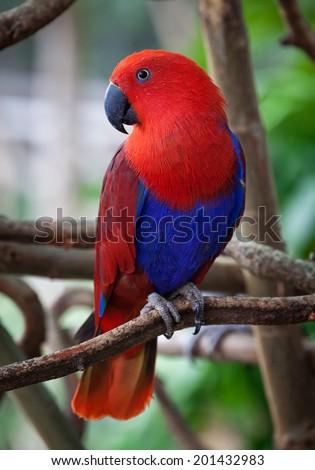 Lory bird #201432983