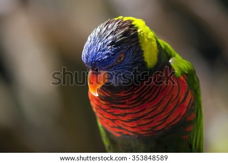Lory parrot at the zoo #353848589
