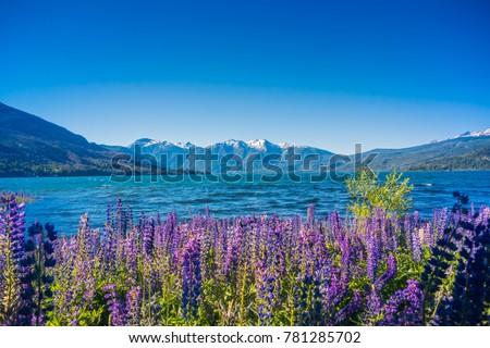Los Alerces National Park, Patagonia, Argentina.